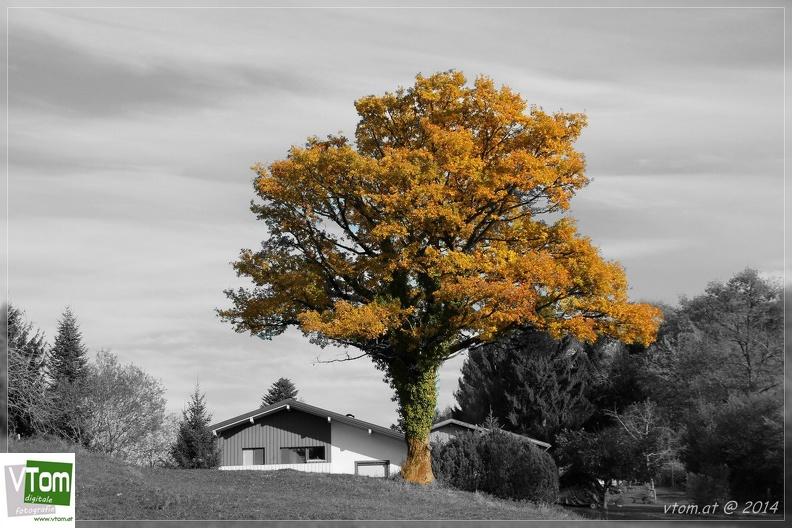 Bunte Herbstfarben