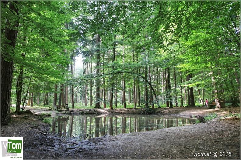 Familienwanderung in den Wildpark Feldkirch